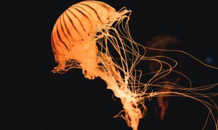 La bioluminescència