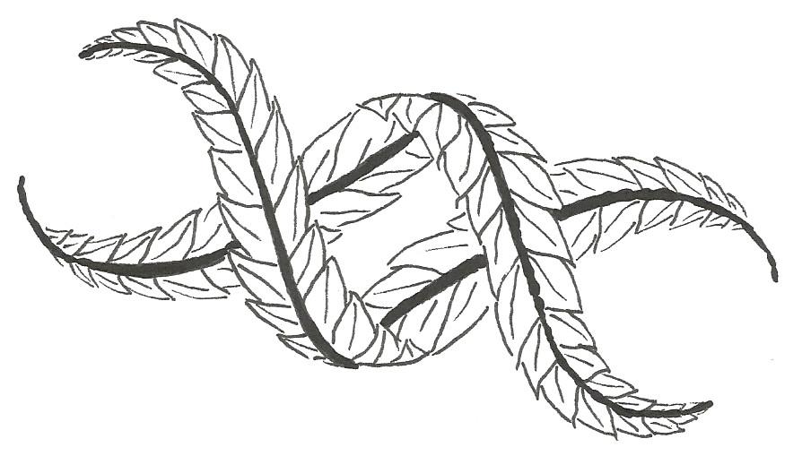 DNA planta