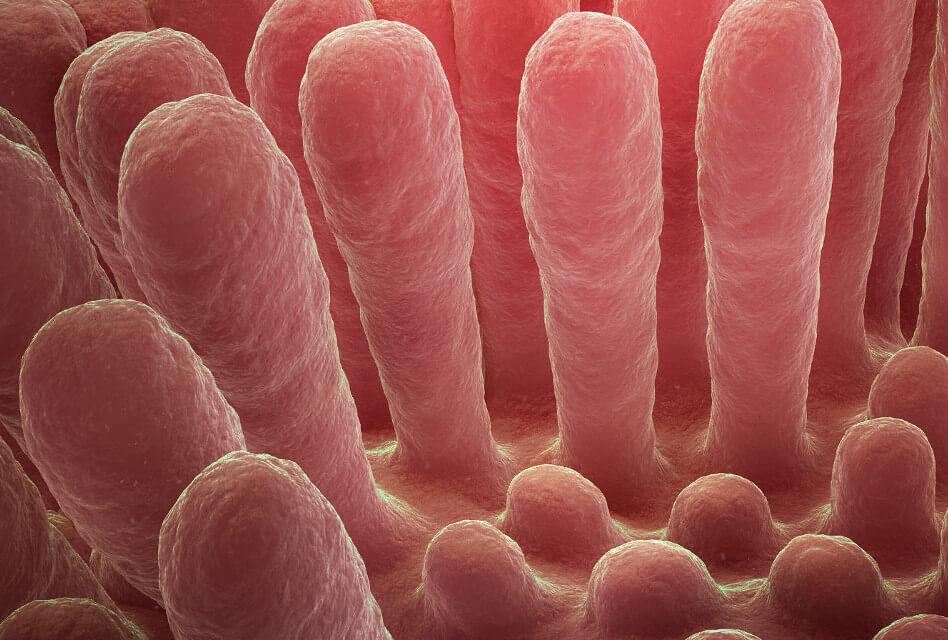 Salut intestinal i microbiota