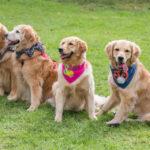 El paper dels gossos en la pandèmia